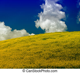 Blurred moving yellow flowers on a Tuscan field in spring