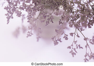 blurred of dried pink flowers in a vase background