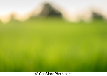 Blurred of rice field in the morning.