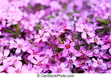 blurred purple floral background