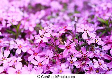 blurred purple floral background