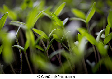 Blurred shot of fresh green sprouts growing on ground
