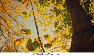 Blurred shot of the yellow leaves on the autumnal tree looking up from below along the tree trung.