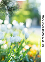 Blurred spring flowers background.