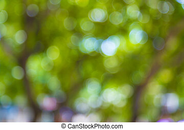 blurred trees in sunlight