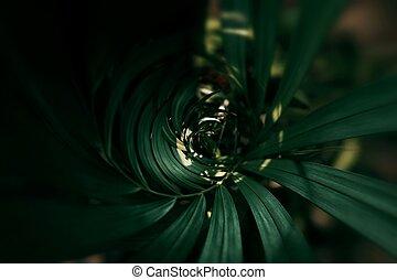Blurred Tropical green leaf in dark tone.