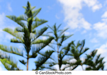Blurred view pine forest in the summer sky
