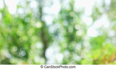 Blurred waving trees. Green nature bokeh background.