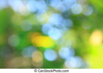 blurry image of trees in a summer forest.
