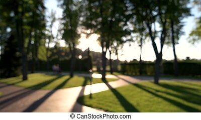 Blurry people and dog, park. Sunlight and tree shadows....