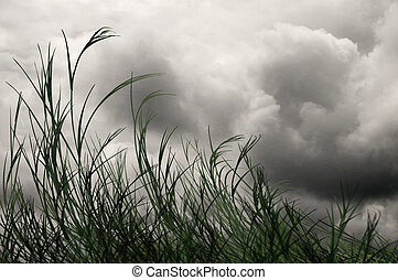 Blustery - Grass blowing in the wind under gray skies