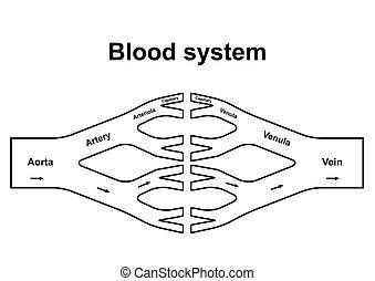 blut, zirkulation, system