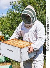 boîte, apiculteur, porter, mâle, rucher, rayon miel