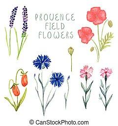 boîte, boîte, ensemble, floral, creator., dessiné, main, aquarelle, posies, bois, divers, usines, combinaisons, conception, baies, fleurs