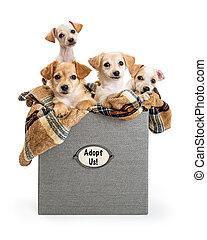 boîte, chiots, adoption