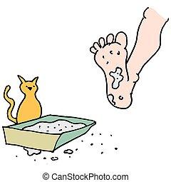boîte, civière kitty, sale, marcher, homme