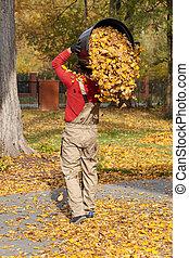 boîte, feuilles, dehors