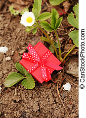 boîte, fraises, jardin, cadeau, rouges