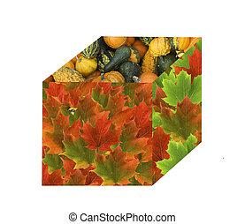 boîte, récolte, automne