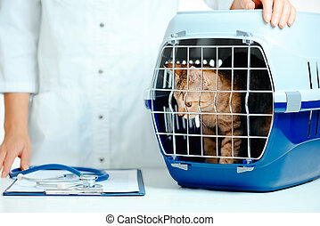 boîte, veterinarian., visite, porteur, chaton