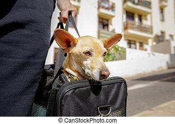 boîte, voyage, chien, sac, prêt, ou, transport