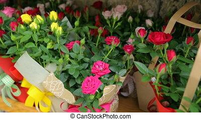 boîtes, coloré, fleurs, marché