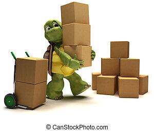 boîtes, tortue, expédition