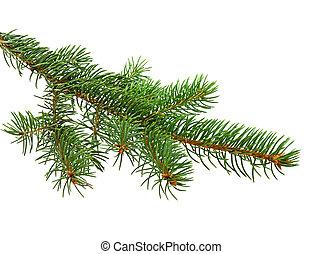 boże narodzenie, gałąź, drzewo