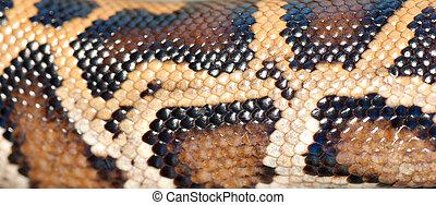 boa snake pattern background macro