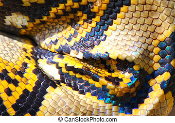 boa snake skin and scales pattern macro