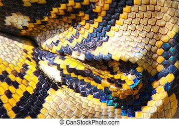 boa snake skin and scales pattern macro