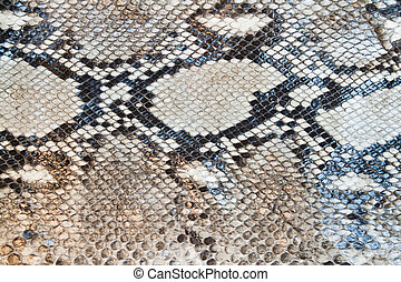 Boa snake skin pattern texture background