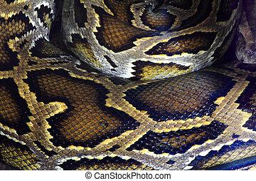 Boa snake skin texture and pattern - boa snake skin from...