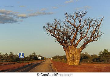 Boab Tree Outback Australia - Boab Tree standing at roadside...