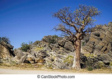 Boab Trees rocks and blue sky