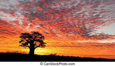 Sunrise over Nxai Pan