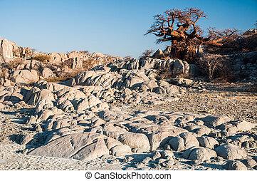 Boabab on Granite Rocks