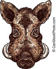 Boar, pig or hog wild animal isolated sketch