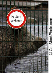 Boar prohibited feed, sign on a fence