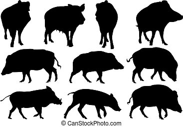 Boar Silhouette vector illustration