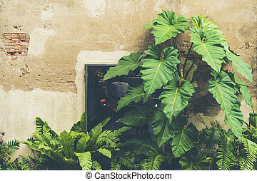 board leaf plant with the old brick wall