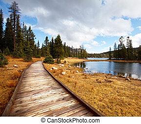 Boardwalk - boardwalk in forest