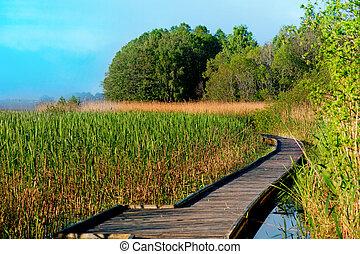 boardwalk, caminho, em, pântano