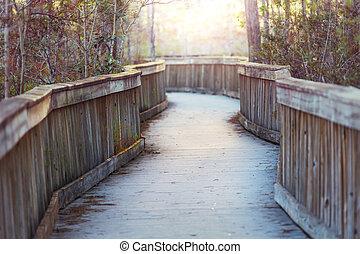 Boardwalk in Everglades
