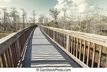Boardwalk in swamp
