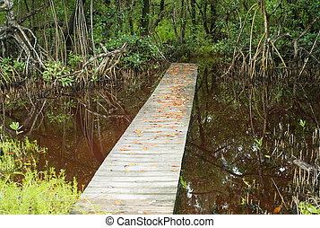 Boardwalk in the Everglades, Florida, USA