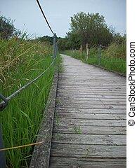 Boardwalk in the Wetland