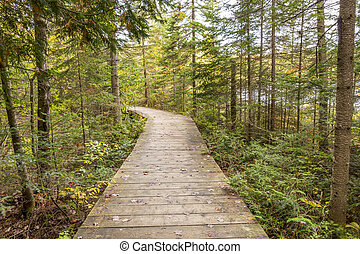 Boardwalk Leading Through a Coniferous Forest - Ontario,...