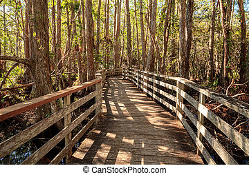 Boardwalk path at Corkscrew Swamp Sanctuary in Naples,...
