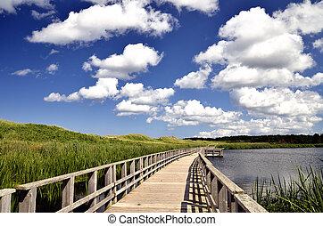 boardwalk, playa, pantano
